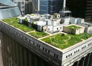gradina de pe acoperisul promariei din Chicago