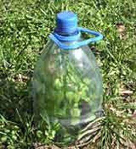 protectie plante cu pet de plastic