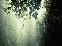 seminte de ploaie