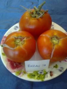 seminte de rosii romanesti