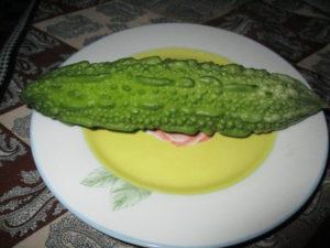 seminte de momordica